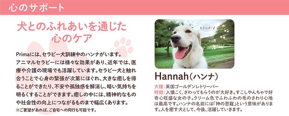 心のサポート 犬とのふれあいを通じた心のケア Hannah(ハンナ) Primaには、セラピー犬訓練中のハンナがいます。 アニマルセラピーには様々な効果があり、近年では、医 療や介護の現場でも活躍しています。セラピー犬と触れ 合うことで心身の緊張が次第にほぐれ、大きな癒しを得ることができたり、不安や孤独感を解消し、暗い気持ちを明るくすることができたりします。癒しの中には、精神的なもの や社会性の向上につながるものまで幅広くあります。 ※ご要望があれば、ご自宅への同行も可能です。 犬種:英国ゴールデンレトリーバー 特徴:人懐こく、さわってもらうのが大好き。すこしやんちゃで好 奇心旺盛な女の子。クリーム色でふわふわの毛のさわり心地 は最高です。ハンナの名前には「神の恩寵」という意味がありま す。人を癒す犬として、今後、活躍していきます。