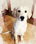 塾のお手伝い犬「ハンナ」
